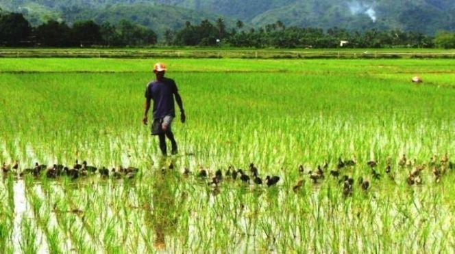 Vallée : la filière riz financée à hauteur de 4, 6 milliards par la LBA