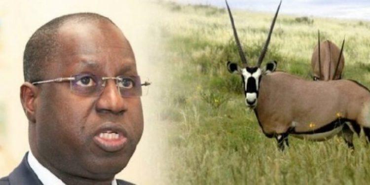 Restitution des Oryx : Abdou Karim Sall parle de « pure manœuvre »
