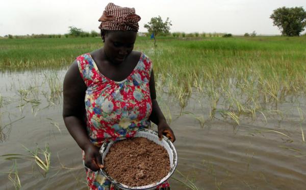 Les femmes ne détiennent que 13% des terres agricoles