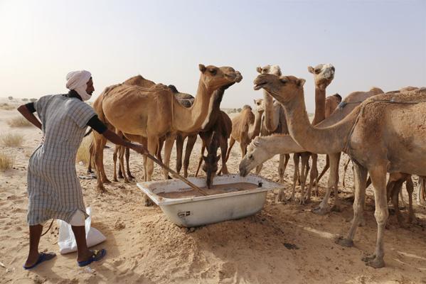 Après le Covid-19 et la fièvre Crimée-Congo, la Mauritanie fait face à la fièvre de la vallée du Rift