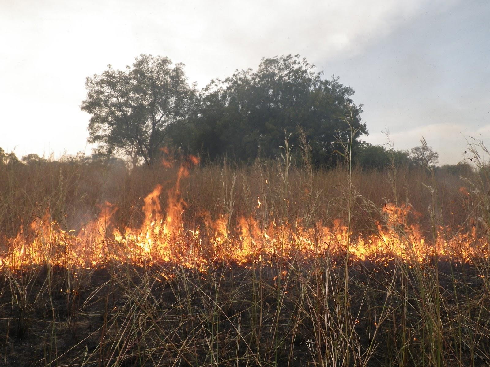 Feux de brousse : 5000 hectares ravagés dans la région de Tambacounda, en 2019