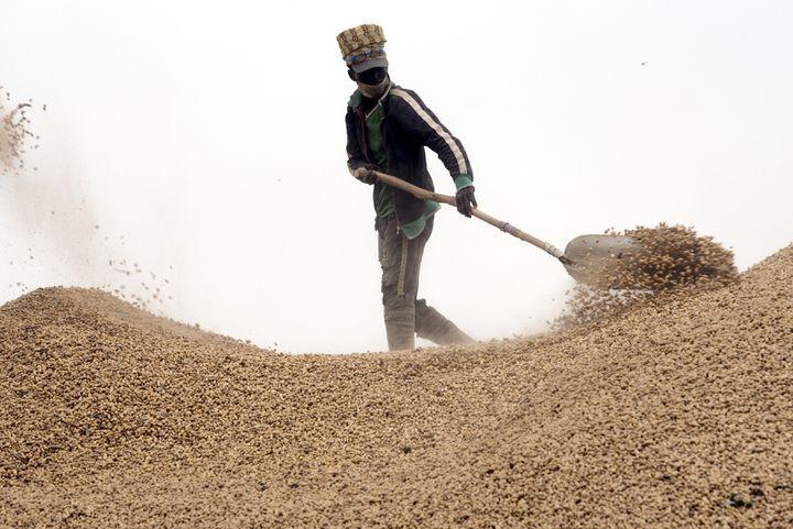 Sénégal : Grosses craintes au démarrage de la campagne arachidière