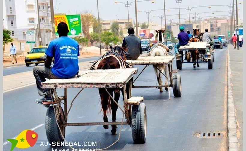Au Sénégal, les charrettes soumises à des visites techniques