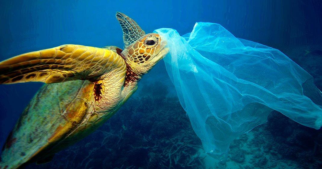 Un projet veut réduire les prises accidentelles des oiseaux et tortues de mer