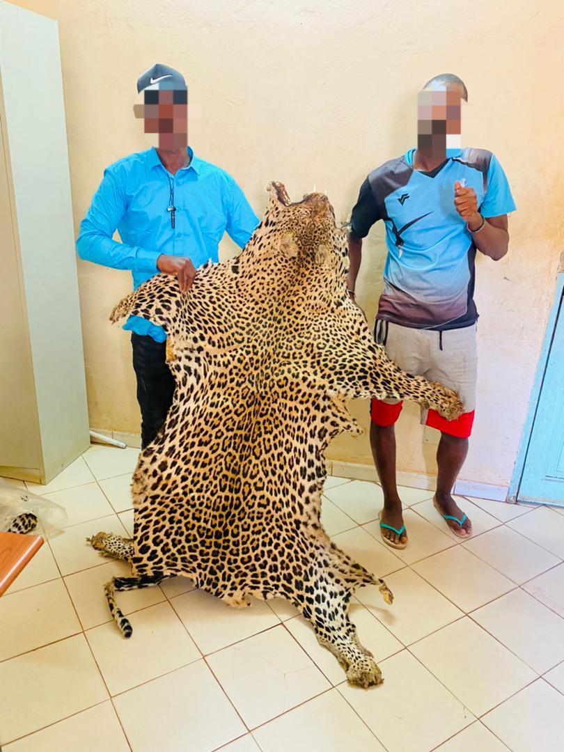 Encore des peaux de léopard saisies à Kédougou !