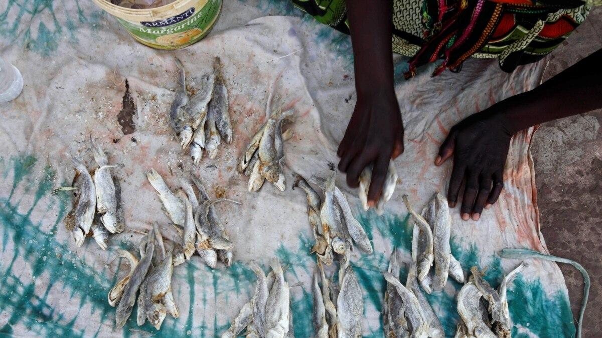 Prolifération des usines farines de poisson : Greenpeace lance une nouvelle alerte