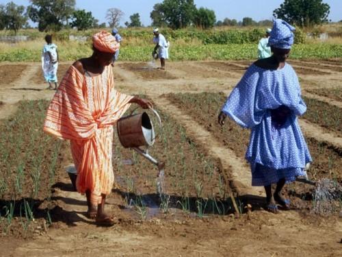 Des villages de Saint-Louis adhèrent au Réseau panafricain des écovillages, samedi.