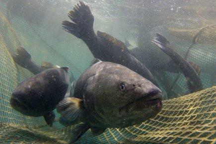 Les bases la pêche zaporoje