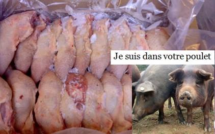 De l'eau et du porc dans le poulet surgelé au Sénégal