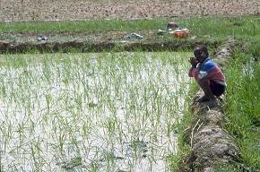 Saint-Louis : les obstacles au développement agricole identifiés.