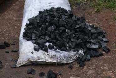 Trafic: 1.470 tonnes de charbon de bois saisies en 2012 (journal)