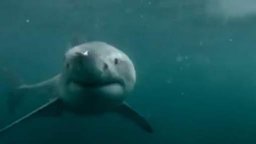 Il survit par miracle à une attaque de requin