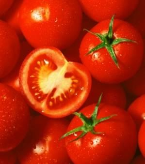 FW13, la tomate qui ne pourrira jamais