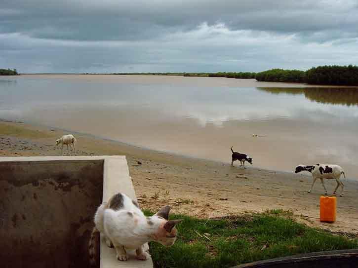 Au 2008 07 30, la mousson avait déjà donné près de 90 mm de pluie sur le bas-delta ndar ndar ! / Depuis le belvédère de Keur Lampsar (15h30), mon ancien pied-à-terre bangotin / Photo par Frédéric Bacuez