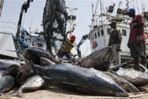 La pêche industrielle illégale a fait perdre au Sénégal 145 milliards FCFA