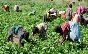 L'UNCAS annonce 1.000 coopératives agricoles intégrées-bio