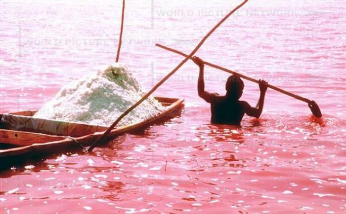 DECOUVERTE: Au fond des eaux du lac rose