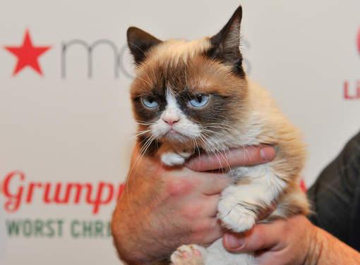 """""""Grumpy Cat"""", le chat le plus riche du monde"""