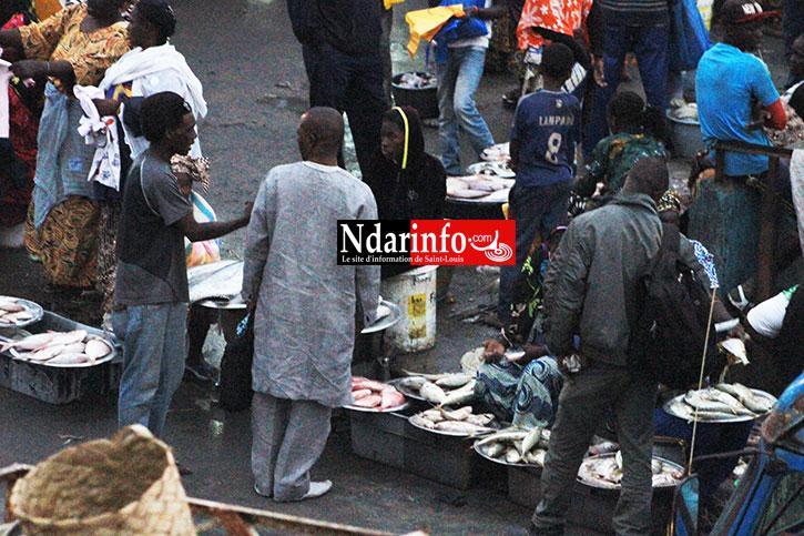 VIDEO - AVENUE GÉNÉRAL DE GAULLE : Entre puanteurs infestes, anarchie débordante, bouchons et saletés de toute sorte !