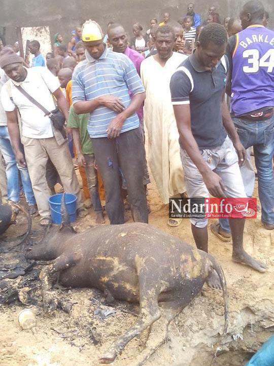 SAINT-LOUIS - GRAVE INCENDIE À BANGO: du bétail calciné (photos)