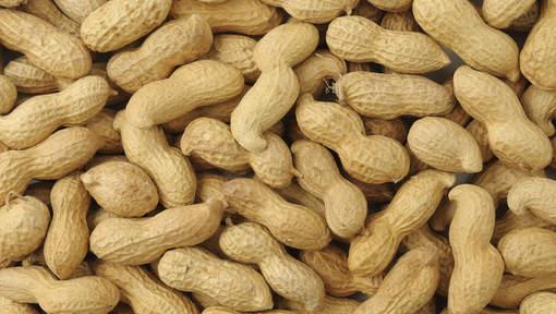 Une bonne raison de manger des cacahuètes