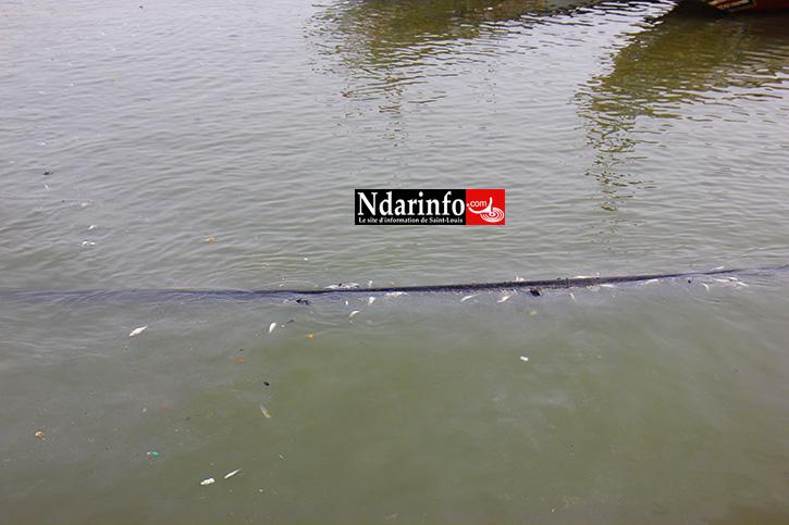 DANGER À SAINT-LOUIS : le canal d'eau qui alimente GUET-NDAR flotte (images)