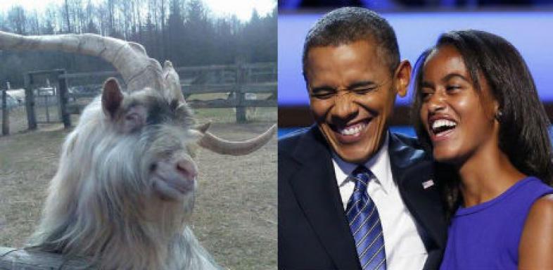 Il propose du bétail contre la fille d'Obama