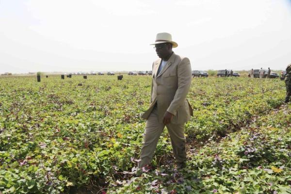 Sénégal : Légère baisse des importations au mois d`Avril