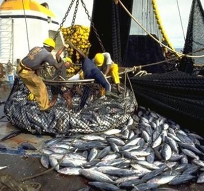 Sénégal : baisse continue des débarquements de poissons