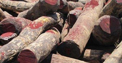 20 000 troncs de bois coupés découverts en Casamance (Haïdar)
