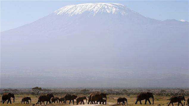 Le Kilimandjaro surplombe l'Afrique avec ses 5895 m.  Photo :  Goran Tomasevic / Reuters