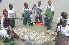 Aquaculture : Le Sénégal vise une production annuelle de 30.000 tonnes en 2018 selon le ministre de la Pêche