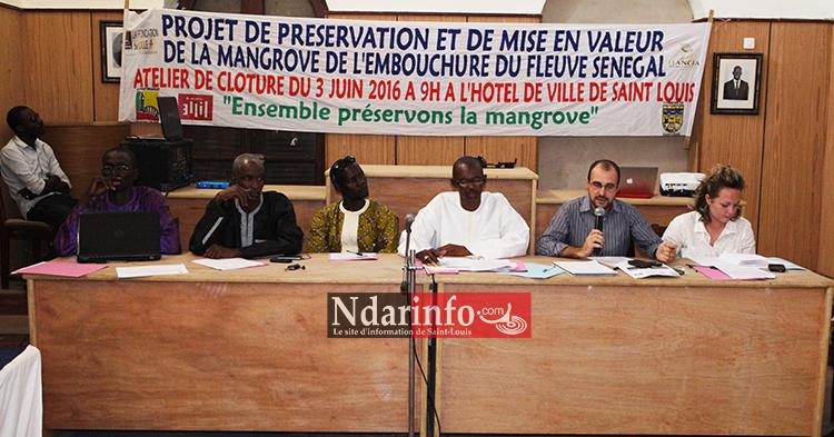 Saint-Louis : l'intercommunalité protège la Mangrove.