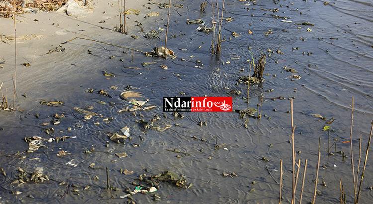 Saint-Louis : les déchets liquides des Chinois polluent le Fleuve (Photos)