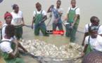 La plus grande ferme piscicole de la sous région réalisée par l'ANIDA à Saint-Louis (DG)