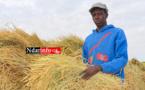 Saint - Louis : 20 milliards pour le secteur agricole