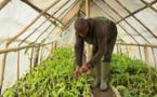 Saint-Louis : ces défis qui pèsent sur les agro-industriels de la vallée