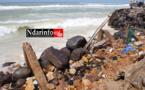 Saint-Louis : des familles de pêcheurs impactées par l'érosion côtière seront relogées à Gandon et Ngalèlle