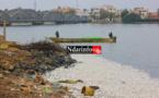 Pêche : des mesures pour stopper le gaspillage ( vidéo )