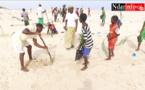 Lutte contre l'érosion côtière : près de 5.000 têtes de filaos plantées sur le littoral de  l'île Keur Bernard, ce matin (vidéo)