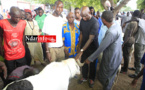 Au foirail de DAROU, Mansour FAYE achète un gros bélier à ... FCFA  (vidéo)