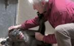 L'adieu émouvant d'un chimpanzé à son vieil ami ( vidéo )