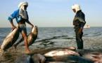 Les pêcheurs sénégalais appelés à respecter la souveraineté mauritanienne sur ses ressources