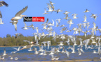 ÉCOLOGIE : À la découverte des colonies d'oiseaux qui peuplent l'îlot du PNLB (VIDÉO & PHOTOS )