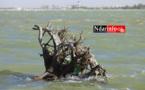 Saint-Louis : La brèche poursuit ses ravages à Gandiol (vidéo-Photos)