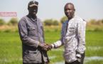 Contrats de culture : comment la CASL soulage les producteurs de riz (vidéo)