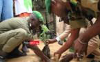 Journée de l'arbre : les bienfaits du Leucaena magnifiés (vidéo)