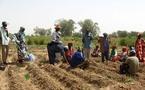 SENEGAL-JAPON-AGRICULTURE:  Vallée du fleuve : la JICA promet 14 unités de transformation du riz