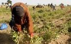 Révélations du président de la Communauté rurale : Mbane, terre promise aux spéculateurs