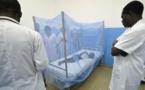 « Business du paludisme » : voici la plante miracle présente au Sénégal et que cacherait l'OMS